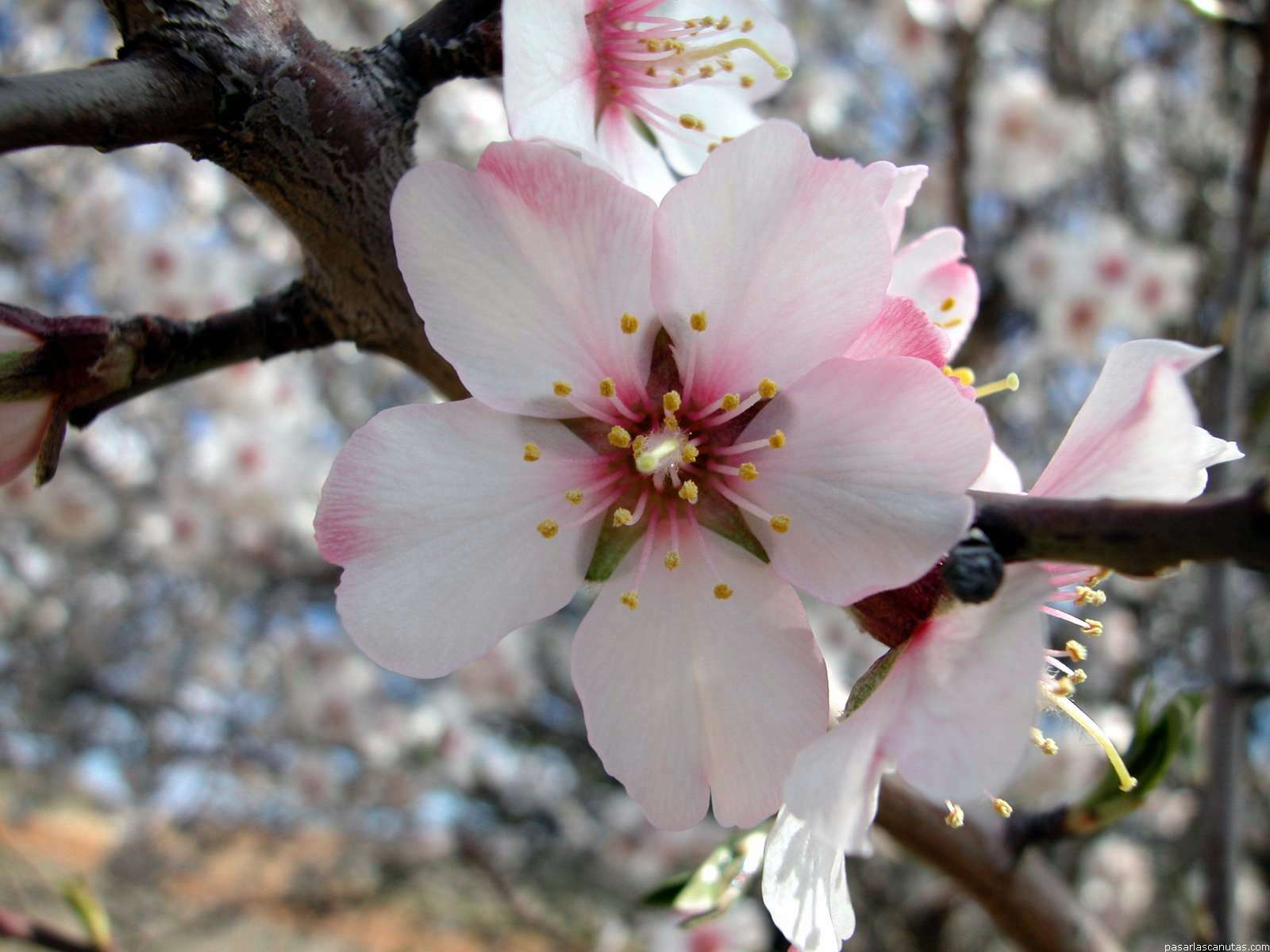 Flores Blancas Png 800 600: Fondos De Pantalla De Alta Calidad De Flores 1
